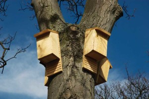 Bat houses high in a tree./iStockphoto.com/Jerome Whittingham