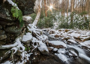 Snowy woods in Big Ivy/Photo by Steve Atkins