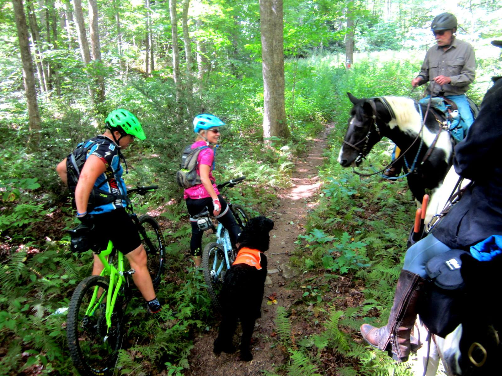 North Mills River Sharing Trails_credit Christine Vigue of Back Country Horsemen of Pisgah_2