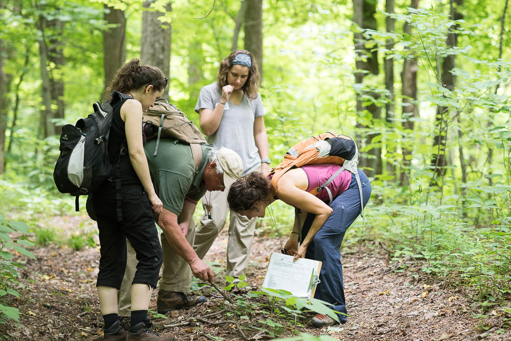 Public And Scientists Document Diversity Of Bluff Mountain During Bioblitz