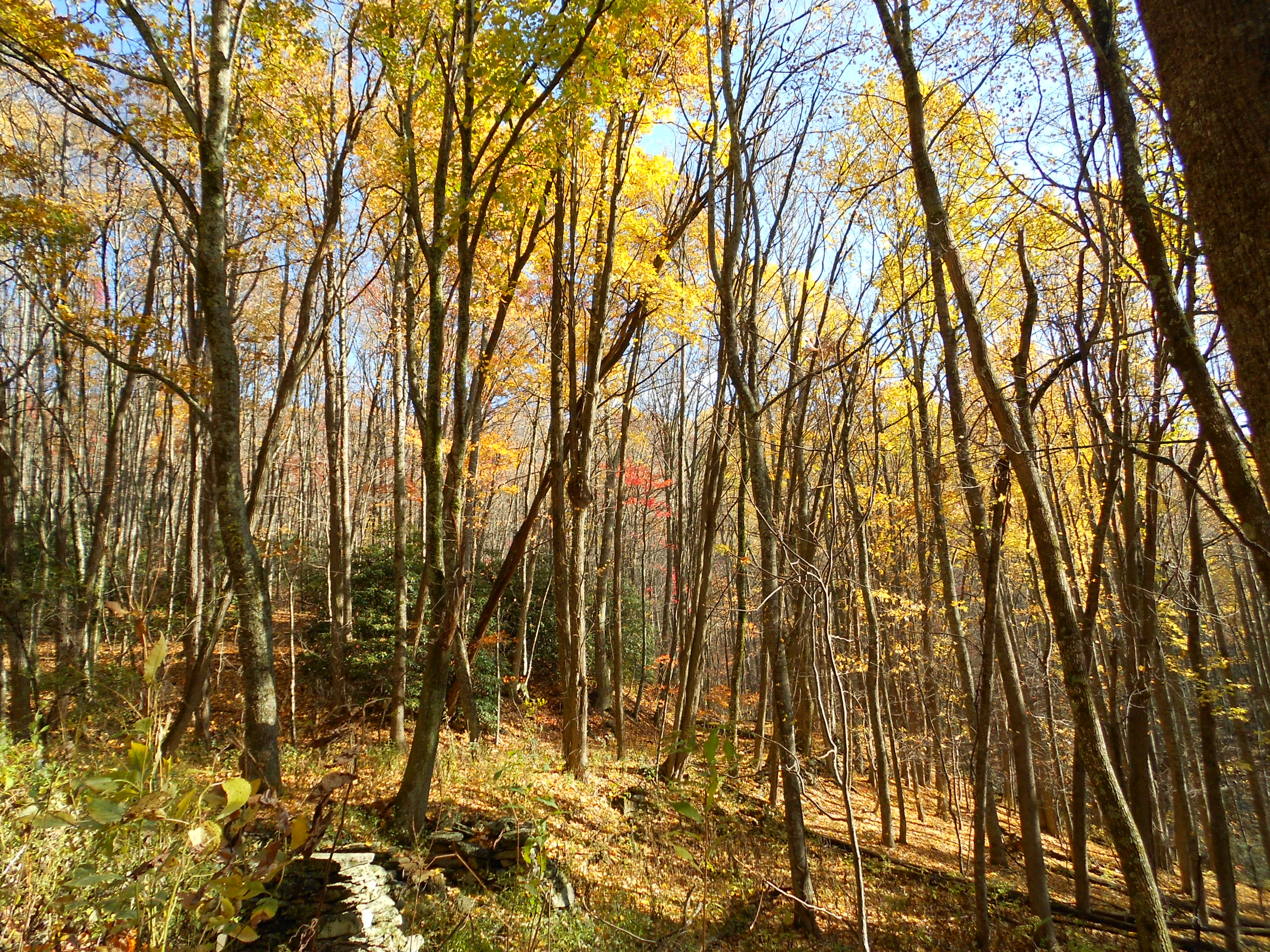 Fall_Color_Hike_2