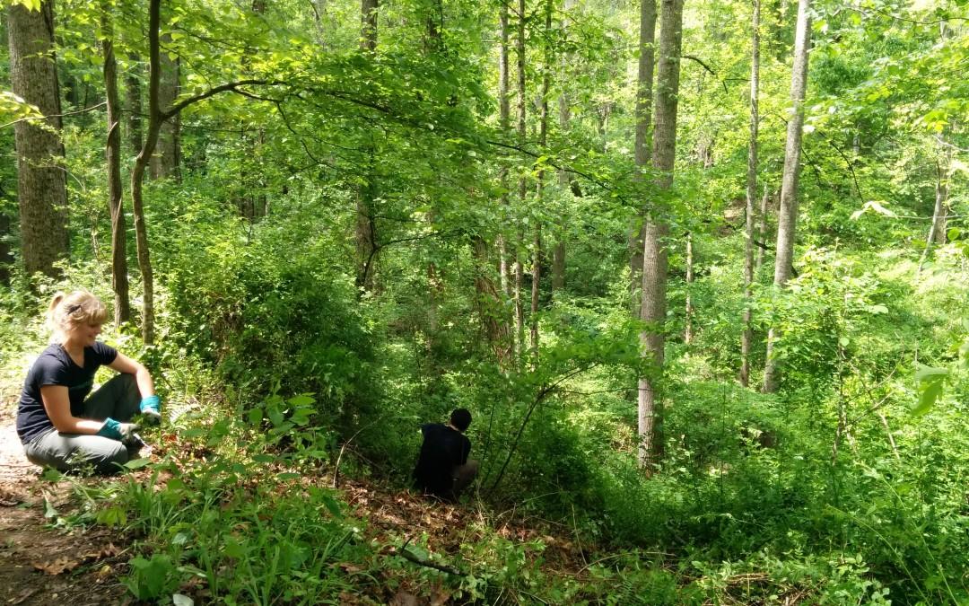 Help Restore Richmond Hill Park with MountainTrue