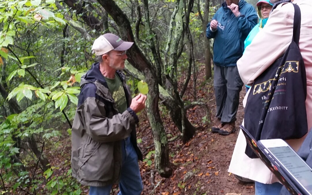 Field Trip: Ecology of Southern Appalachia