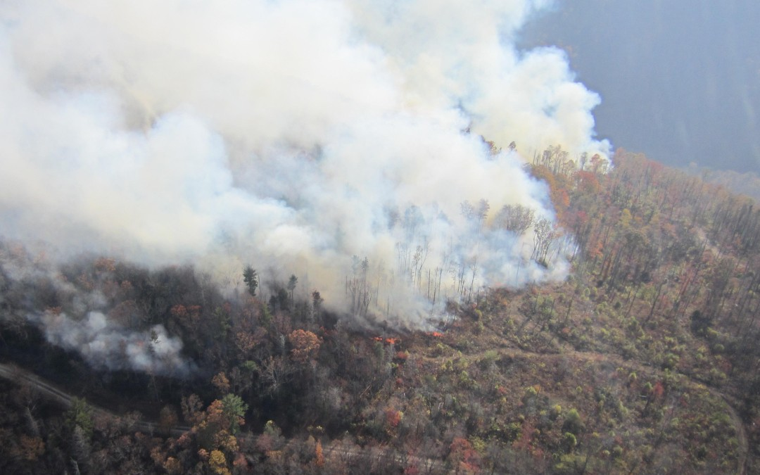 After the Wildfires: Mitigating Climate Change and Adapting to the New Normal