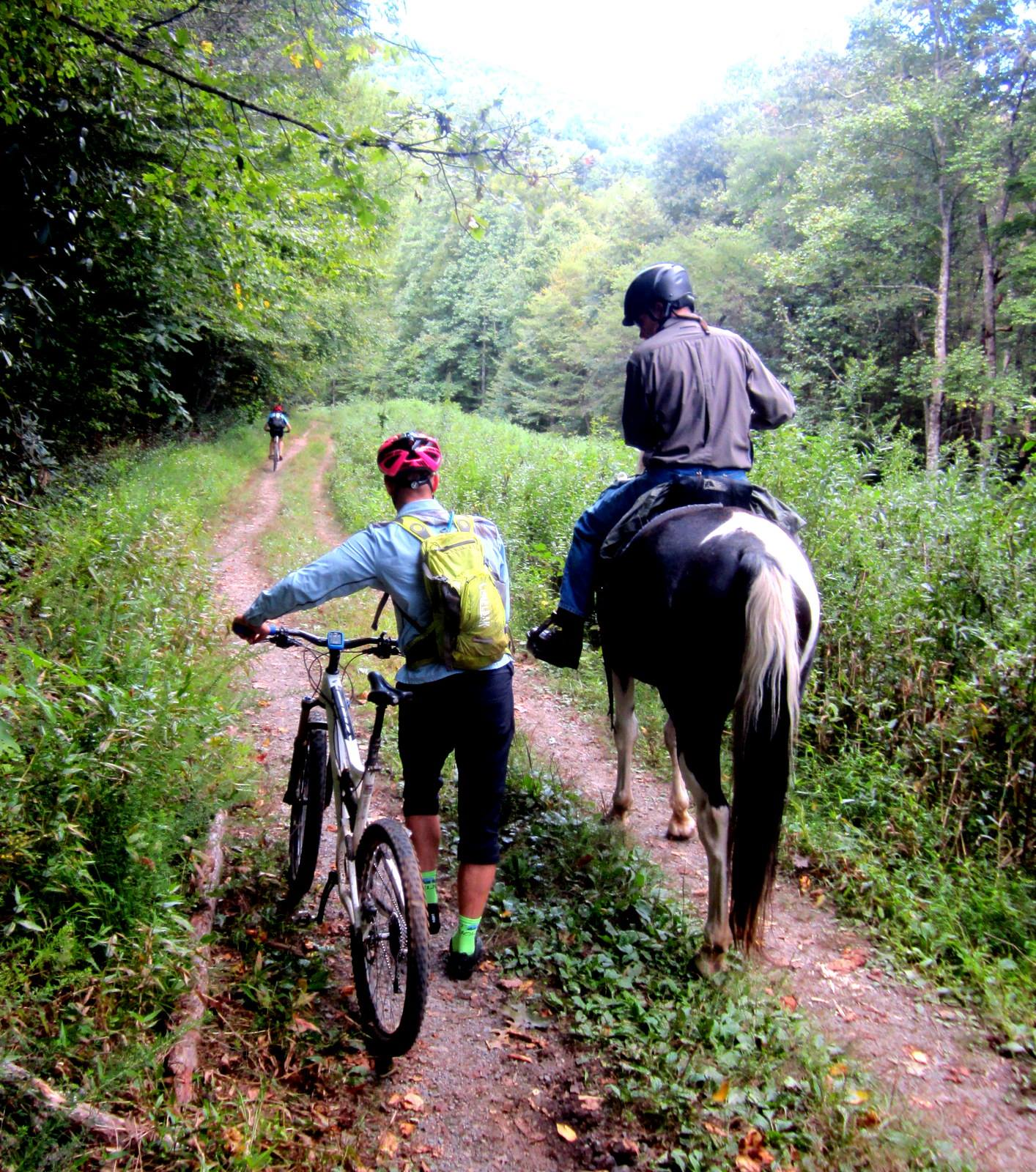 North Mills River Sharing Trails_credit Christine Vigue of Back Country Horsemen of Pisgah_1