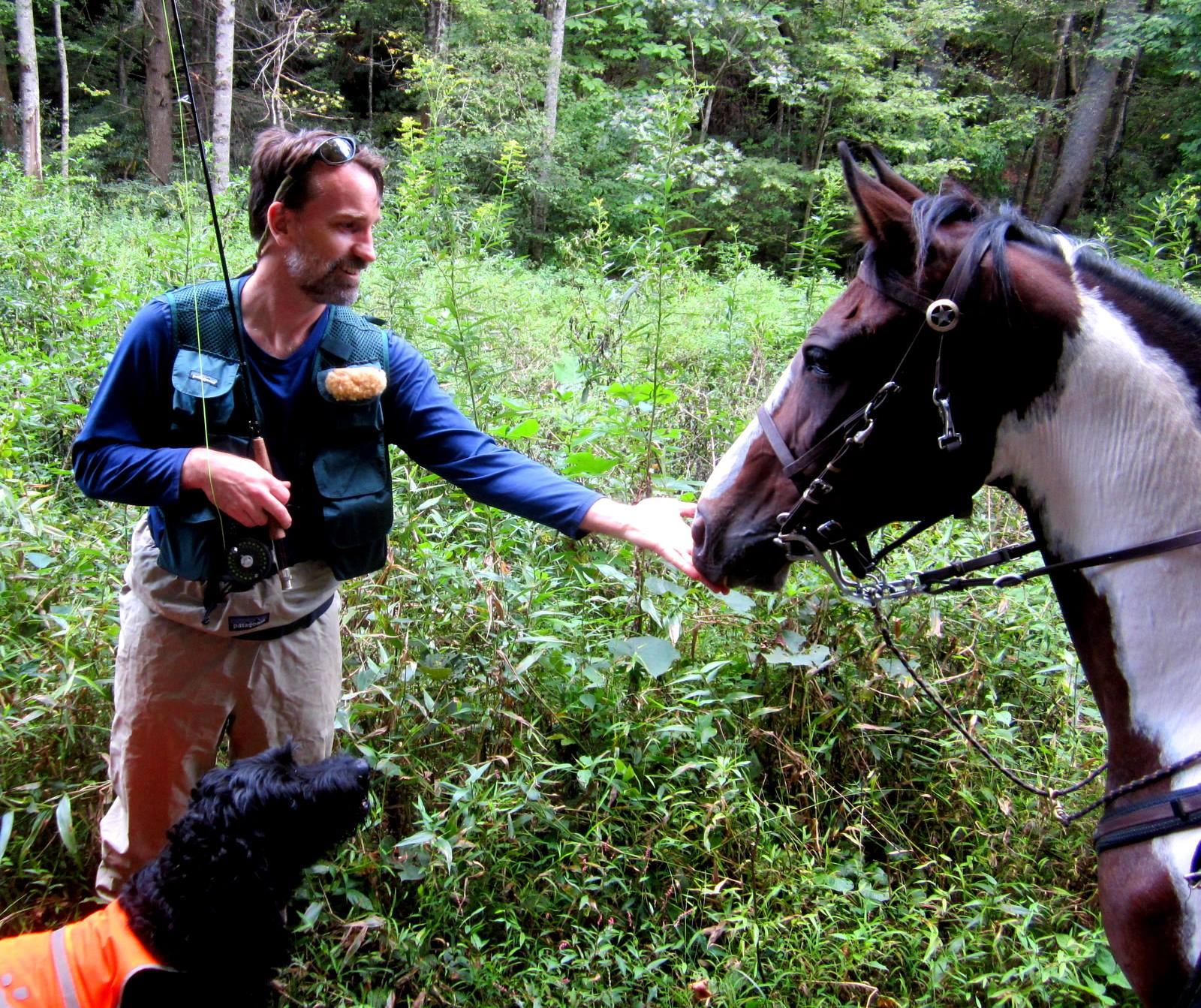 North Mills River Sharing Trails_credit Christine Vigue of Back Country Horsemen of Pisgah_4