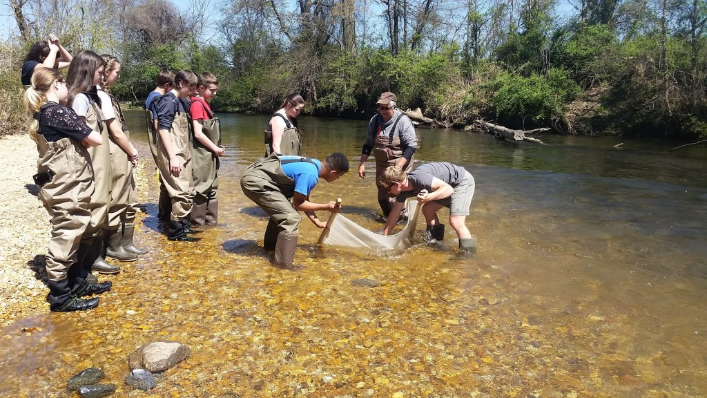 Kids in the creek sampling the river's macro-invertebrates.