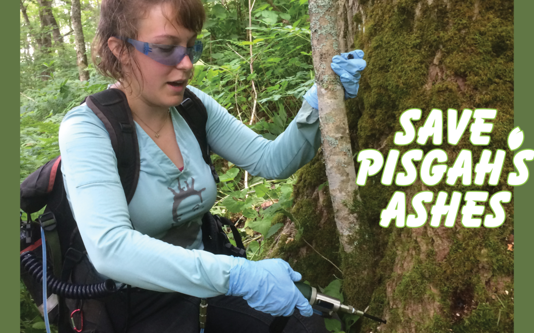 Save Pisgah's Ashes