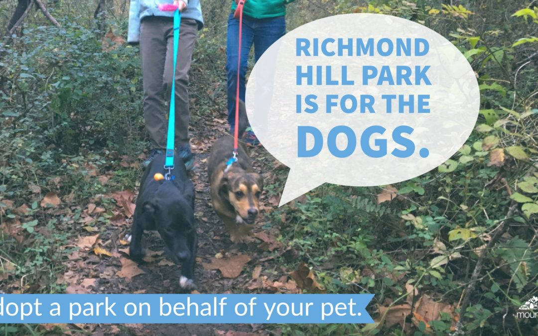 Sign Up for our Richmond Hill Invasives Removal Work Day March 10!