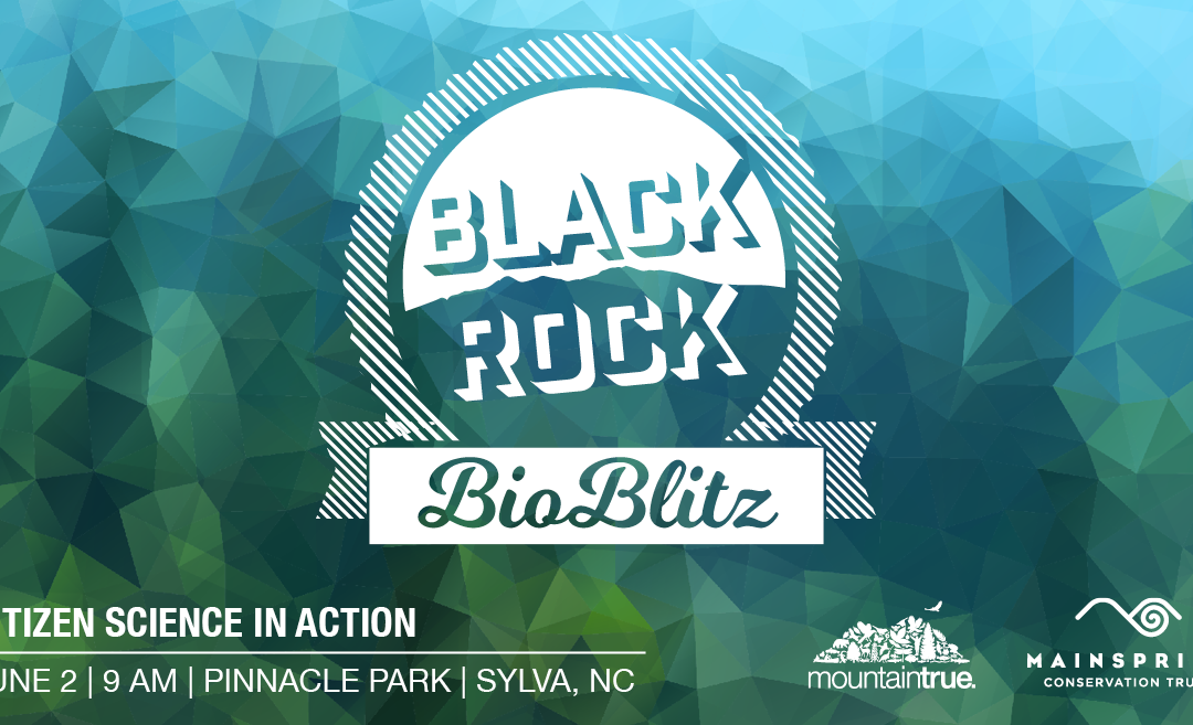 MountainTrue and Mainspring to Host Blackrock BioBlitz at Pinnacle Park in Sylva