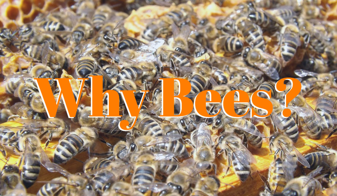 Hendersonville Green Drinks: Why Bees?