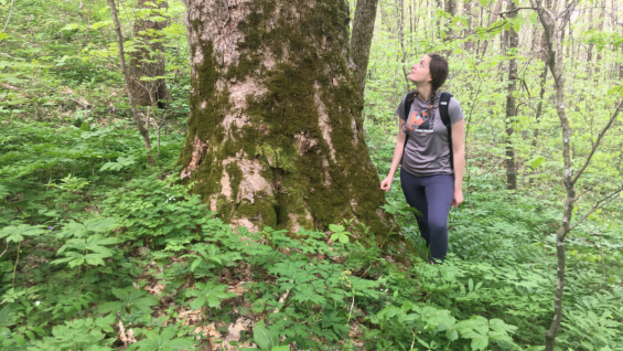 Protect Old-Growth Forest and Vibrant Ecosystems in the Buck Project