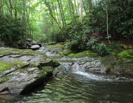 Keep Beech Creek Flowing! Say No To The Permit Revision.