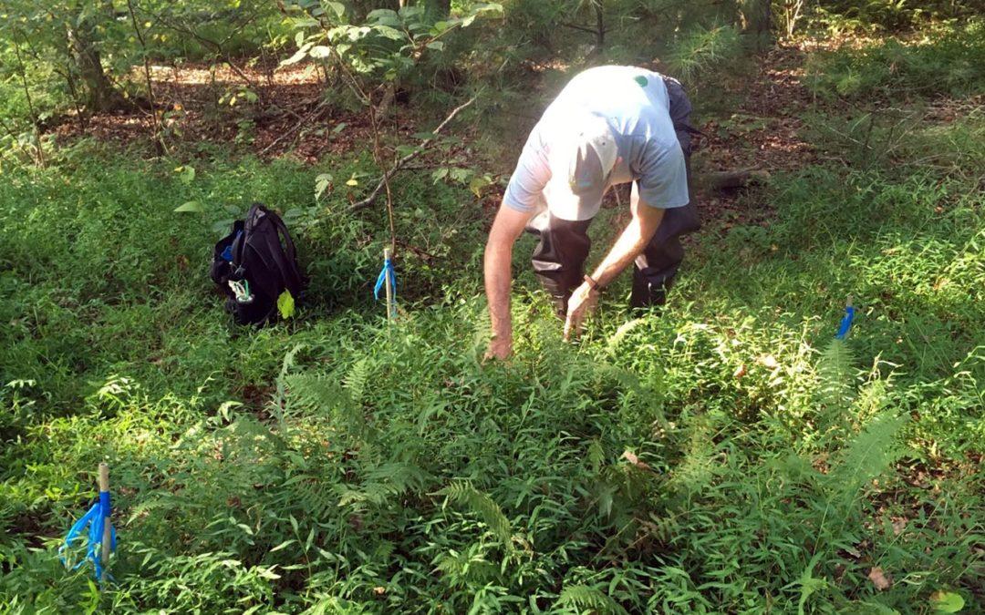 Public Lands Team Experiments on Invasive Species