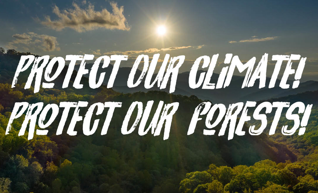 Protect the Nantahala-Pisgah National Forest — Our Region's Natural Carbon Sink