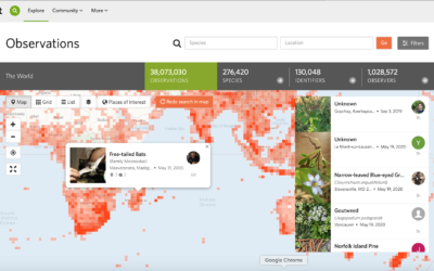 Our 2021 BioBlitz Tri-County Smackdown: Powered by iNaturalist