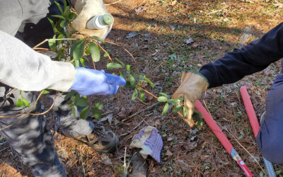 Removing Non-Native Invasive Plants In Hot Springs With Tamia Dame and Bob Gale