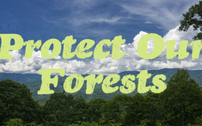 Protect Old-Growth, Wildlife & Our Natural Heritage in Nantahala National Forest